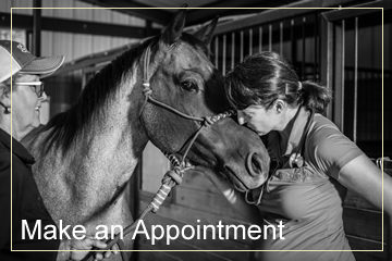 dr boeche is a vet for horses in texas