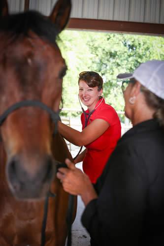 horse veterinarian texas diamond j vet services