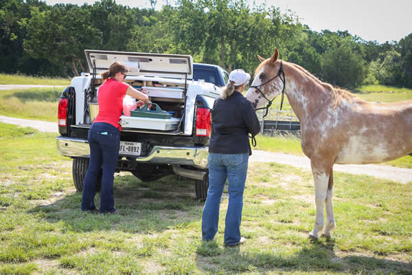 Texas Diamond J Veterinary Services is a mobile equine practice owned and operated by Dr. Jenn Boeche