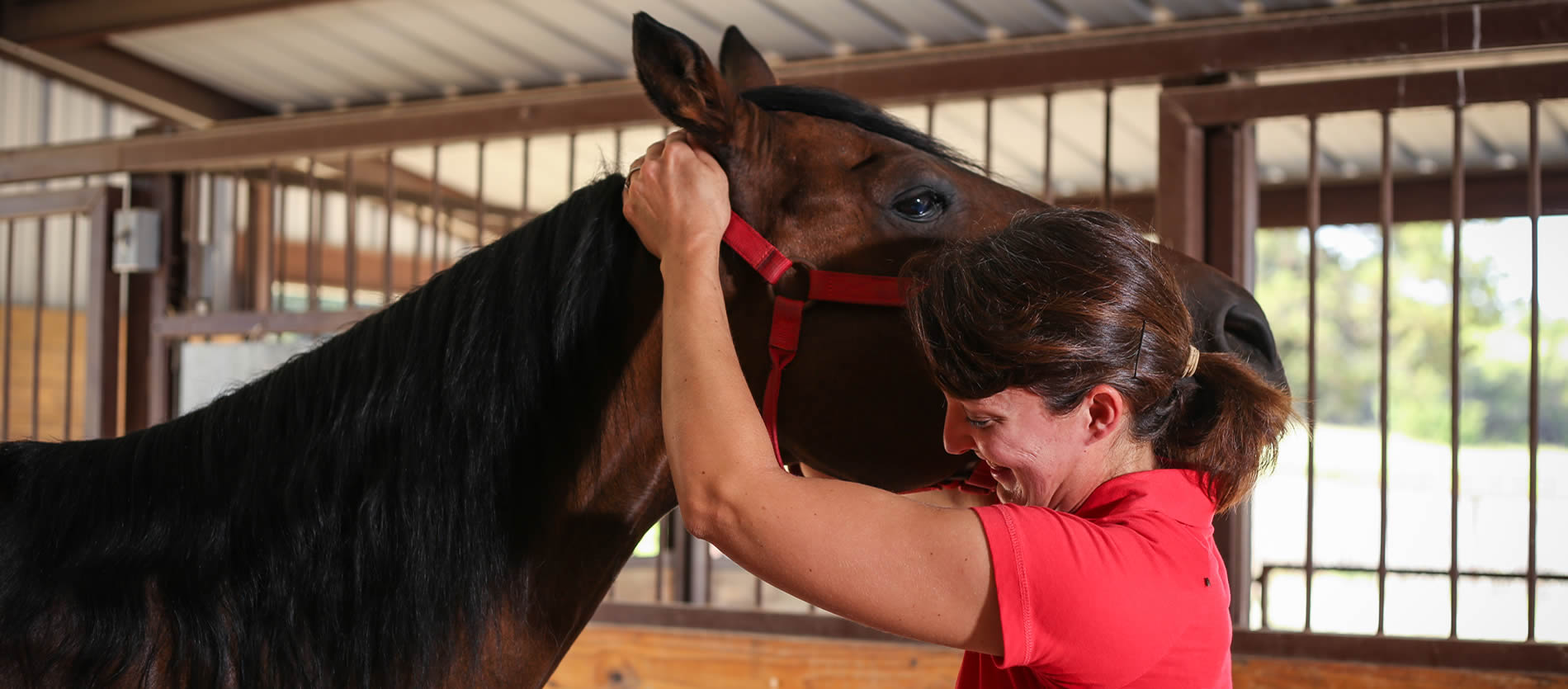 contact texas equine veterinary services jenn boeche