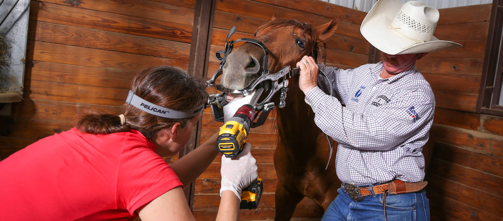 diamond j vet services for horses, dogs and cats