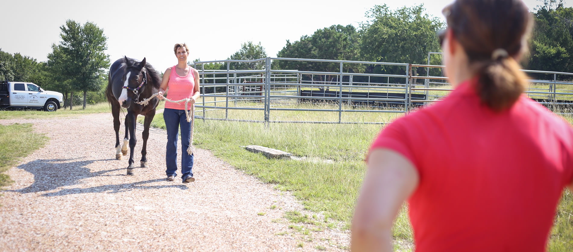 horse vet texas mobile equine services